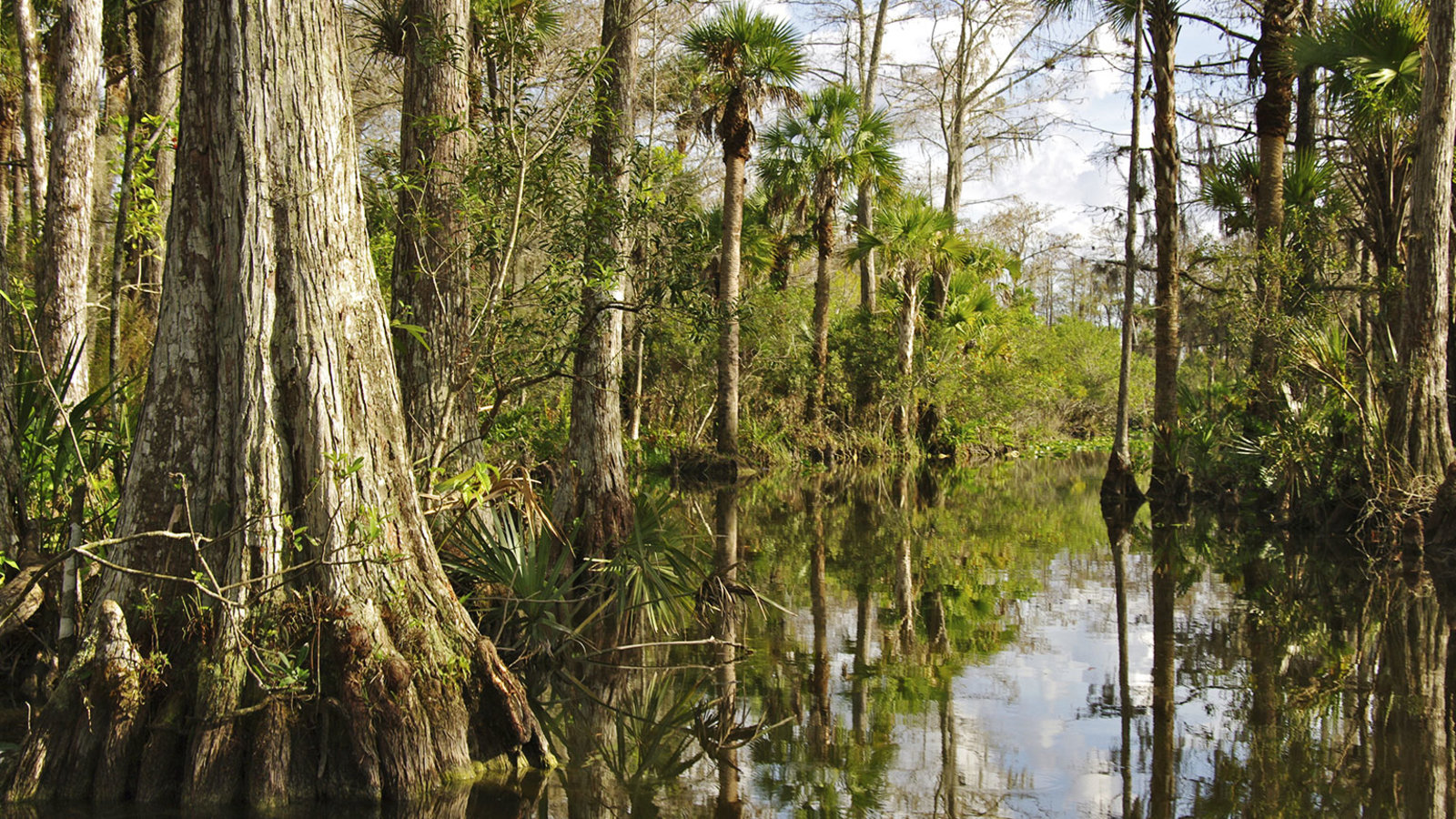 The Everglades and the Congaree Bottomland